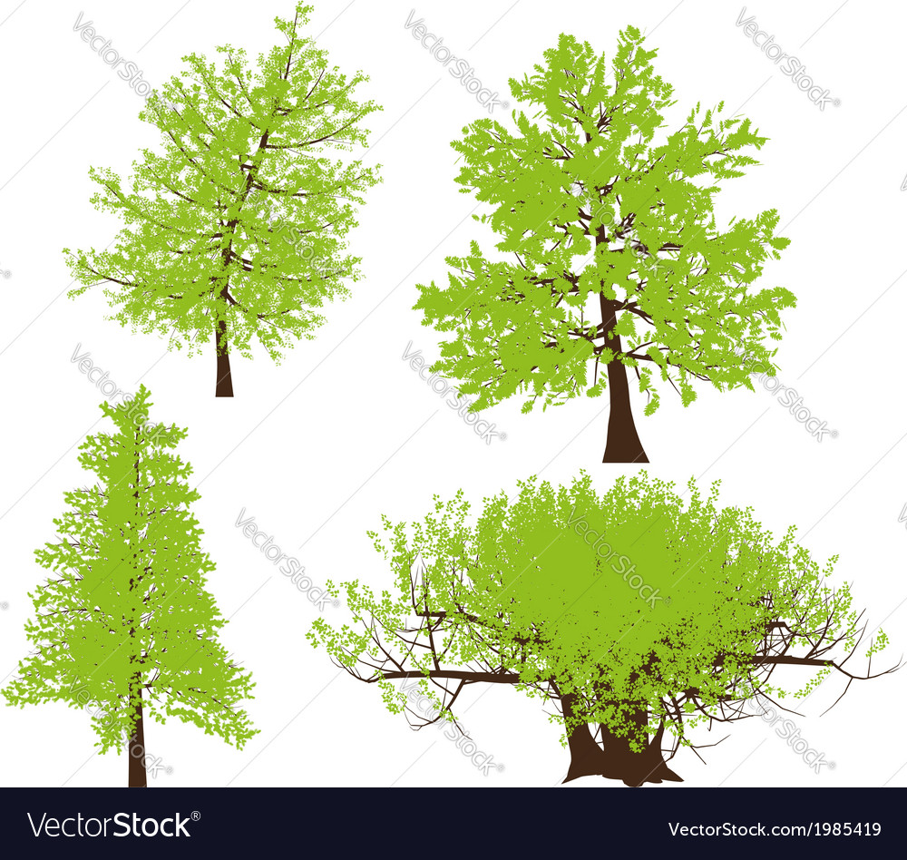 Drawing of the tree llustration vector | Price: 1 Credit (USD $1)