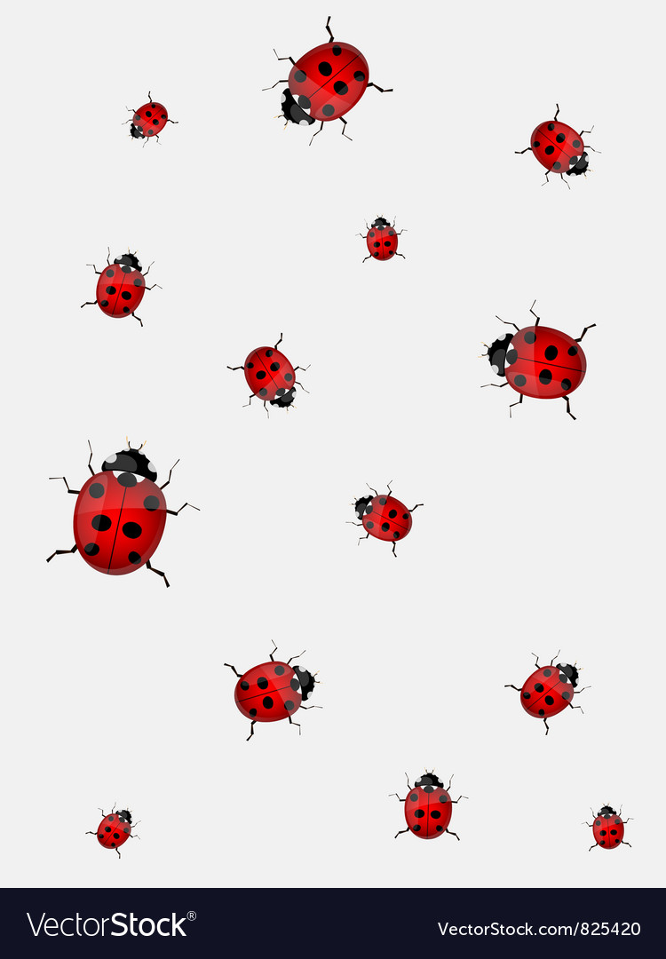 Ladybirds vector | Price: 1 Credit (USD $1)