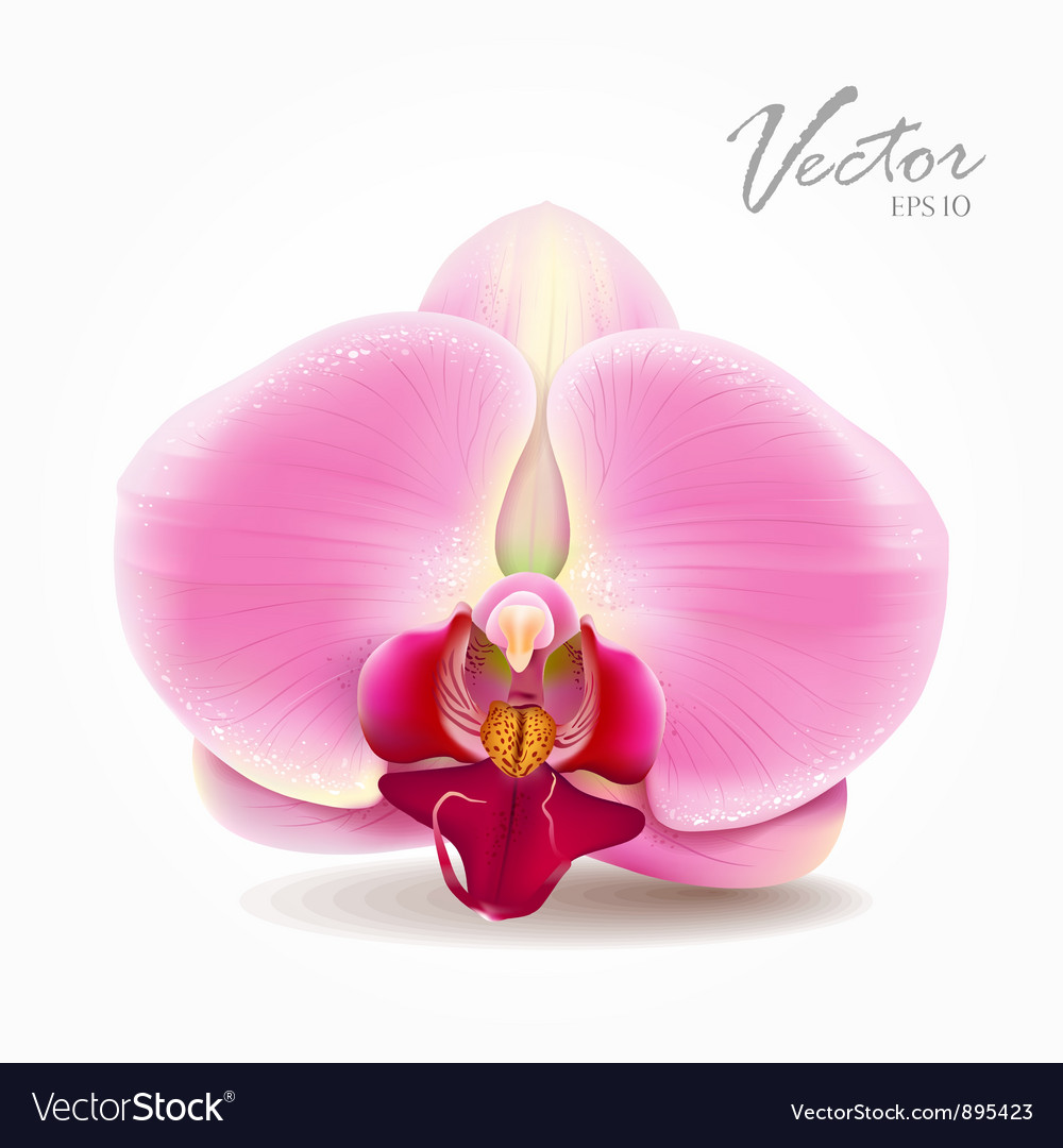 Orchid pink flower vector | Price: 3 Credit (USD $3)