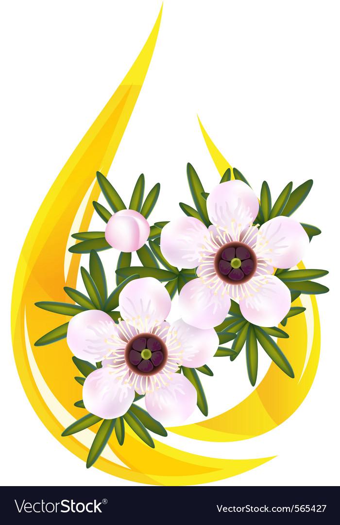 Manuka tea tree vector   Price: 1 Credit (USD $1)