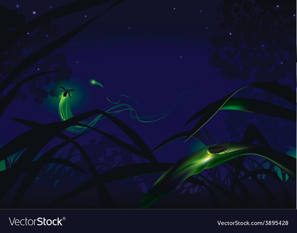 Fireflies vector | Price: 3 Credit (USD $3)