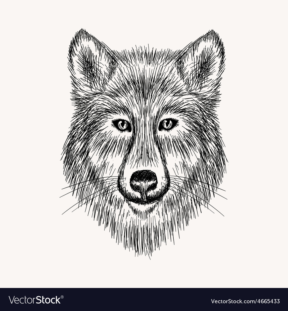 Sketch realistic face wolf hand drawn in doodle vector   Price: 1 Credit (USD $1)