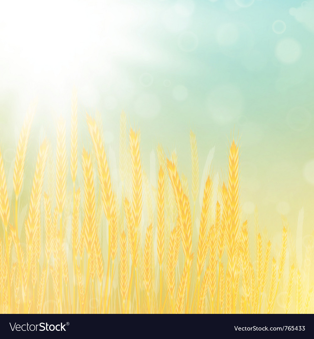 Wheat field vector | Price: 1 Credit (USD $1)