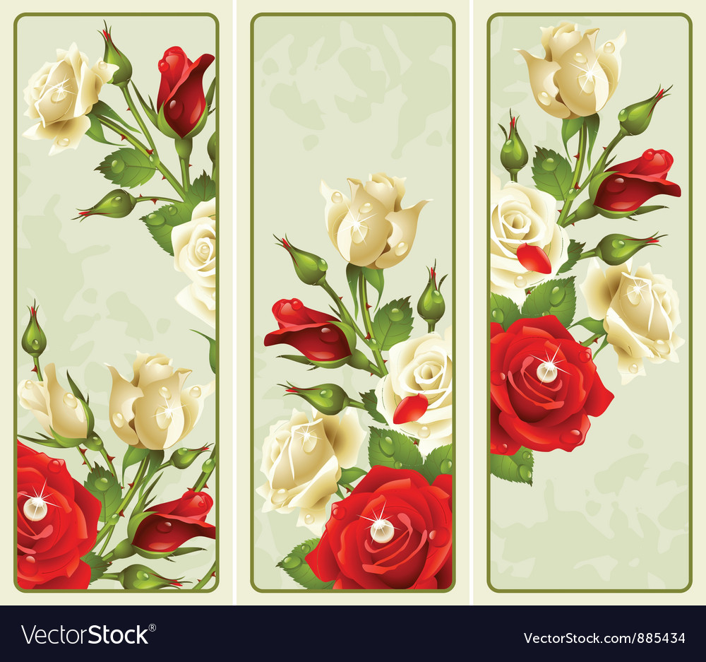 Set of rose vertical banners vector | Price: 3 Credit (USD $3)