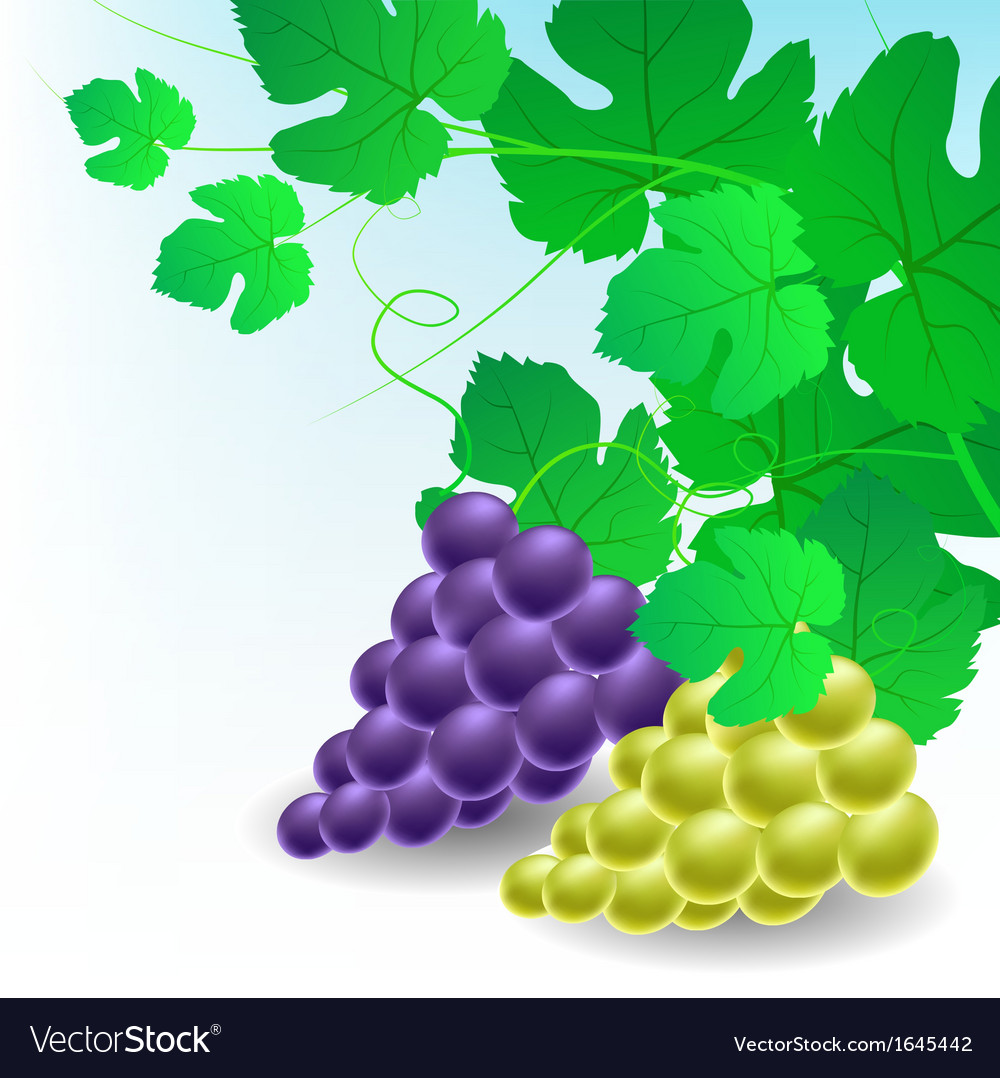 Corner decoration with grapes vector   Price: 1 Credit (USD $1)