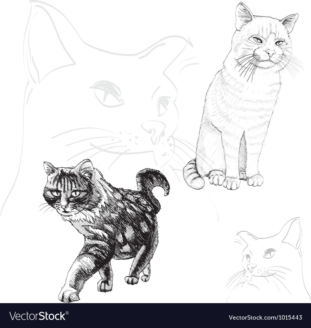 Cat outline vector | Price: 1 Credit (USD $1)