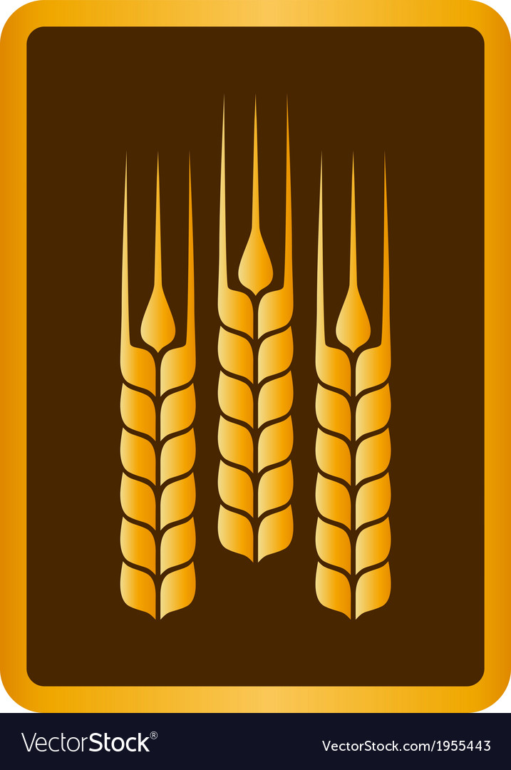 Golden wheat ears vector | Price: 1 Credit (USD $1)