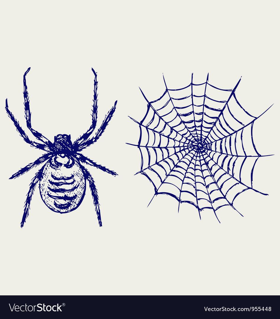 Spider and cobweb vector | Price: 1 Credit (USD $1)