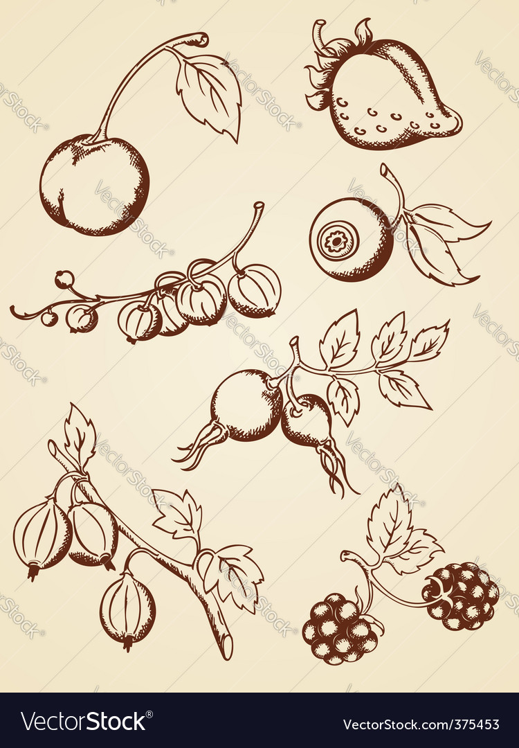Hand drawn vintage berries vector | Price: 1 Credit (USD $1)
