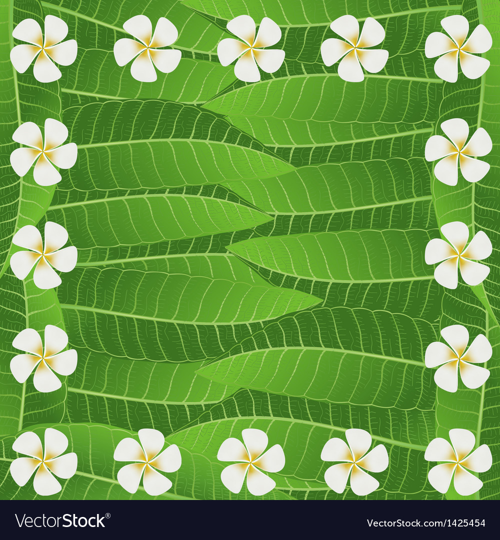 Ornament of frangipani flowers and leaves vector | Price: 1 Credit (USD $1)