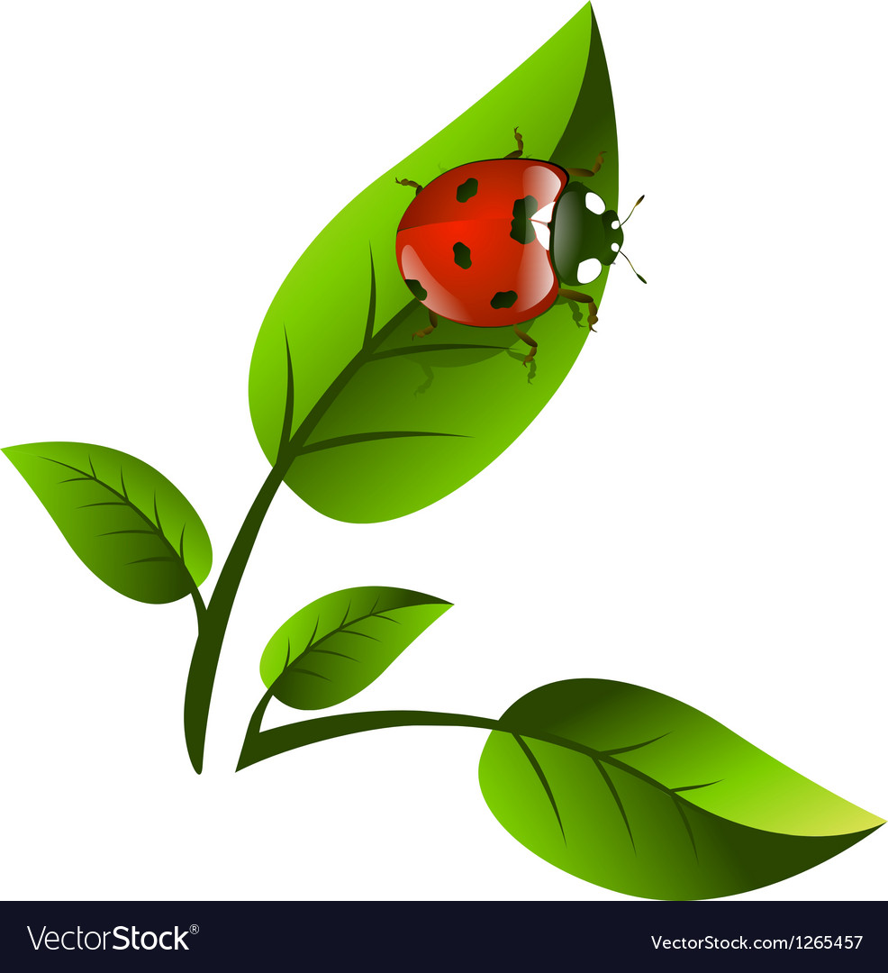Leaf and ladybug vector | Price: 1 Credit (USD $1)