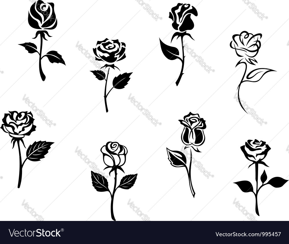 Rose flowers set vector | Price: 1 Credit (USD $1)