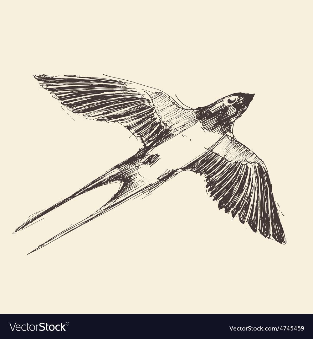 Swallow bird engraved  sketch vector | Price: 1 Credit (USD $1)