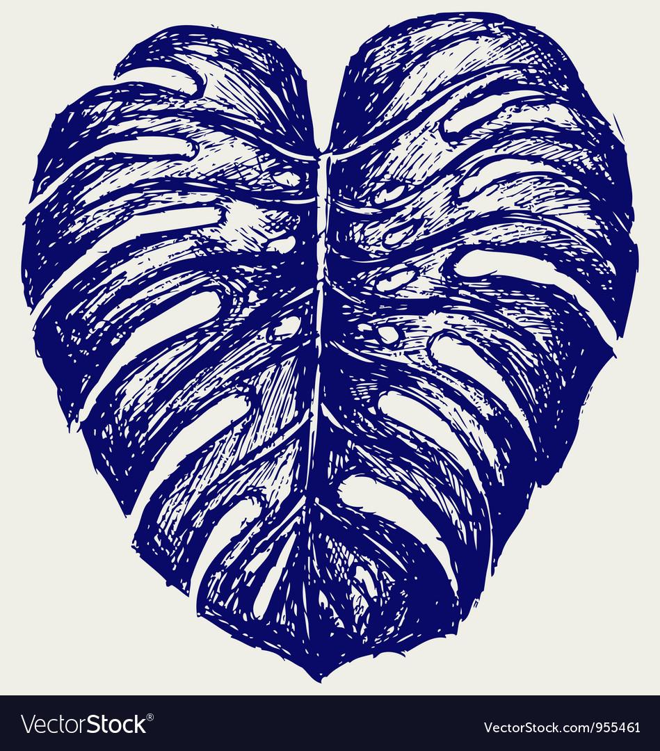 Big leaf of monstera plant vector   Price: 1 Credit (USD $1)