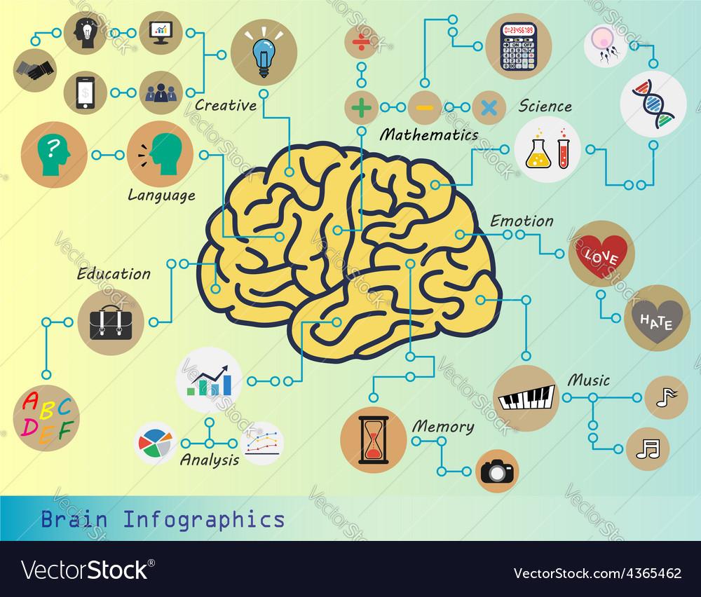 Brain infographic vector | Price: 1 Credit (USD $1)