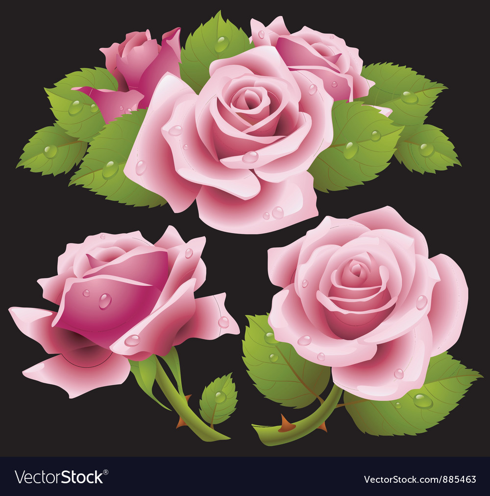 Pink roses set vector | Price: 3 Credit (USD $3)