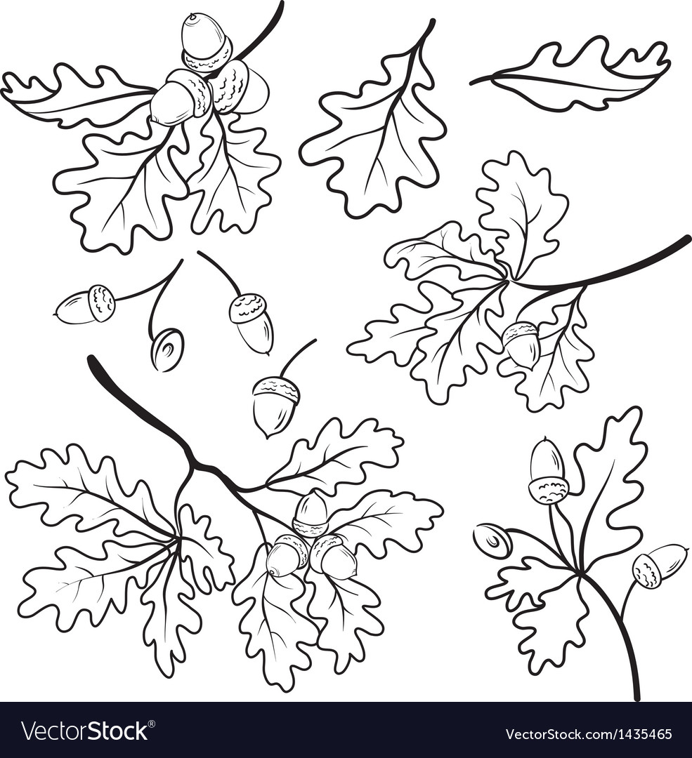 Oak branches with acorns outline vector | Price: 1 Credit (USD $1)