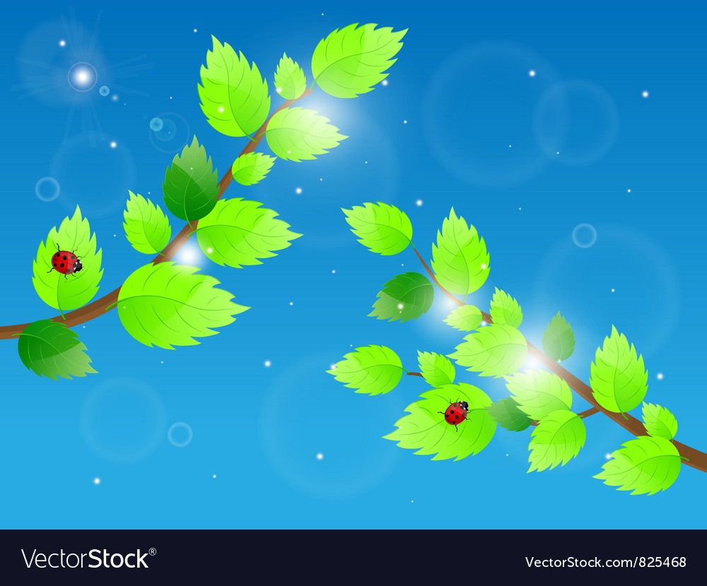 Leaves and ladybird vector | Price: 3 Credit (USD $3)