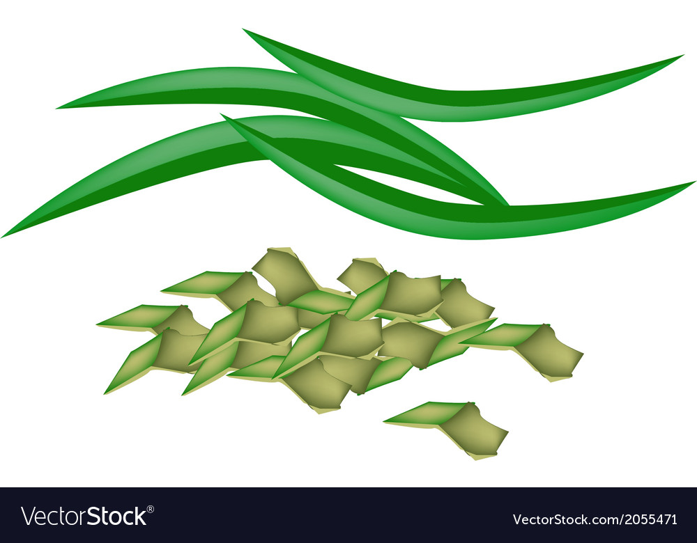 Fresh pandan leaves on a white background vector | Price: 1 Credit (USD $1)