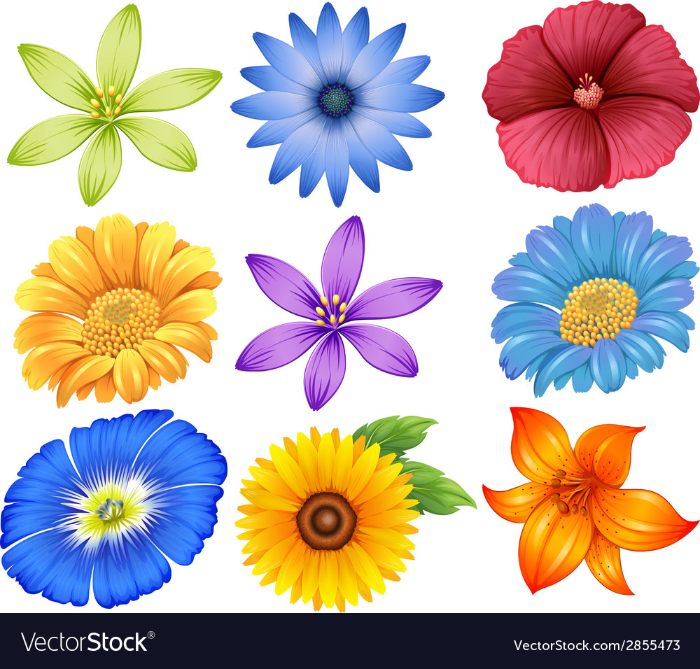 Colourful flowers vector | Price: 1 Credit (USD $1)