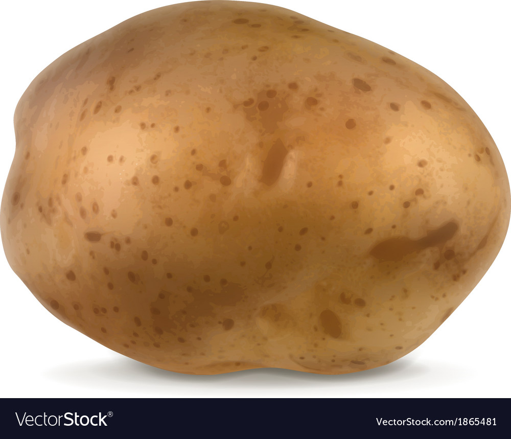 Potato vector | Price: 1 Credit (USD $1)