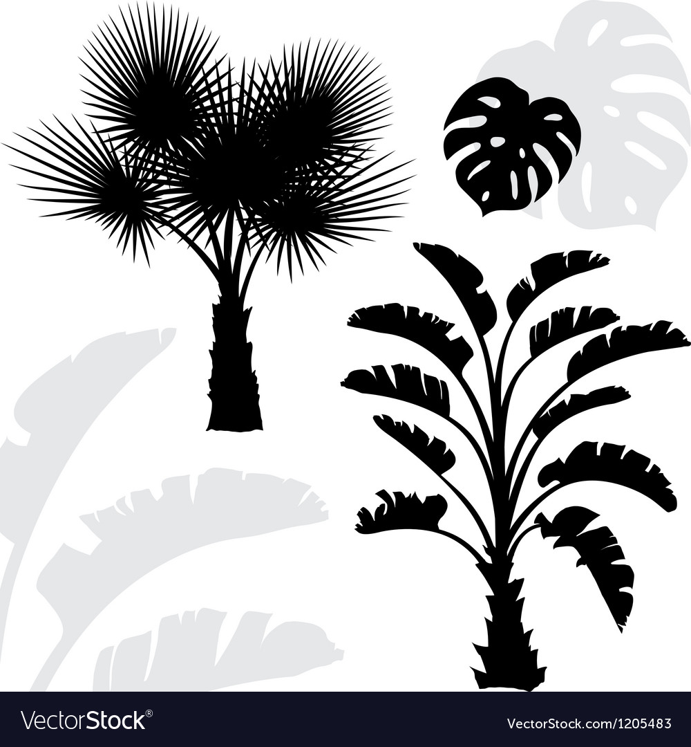 Palm trees black silhouettes on white background vector | Price: 1 Credit (USD $1)