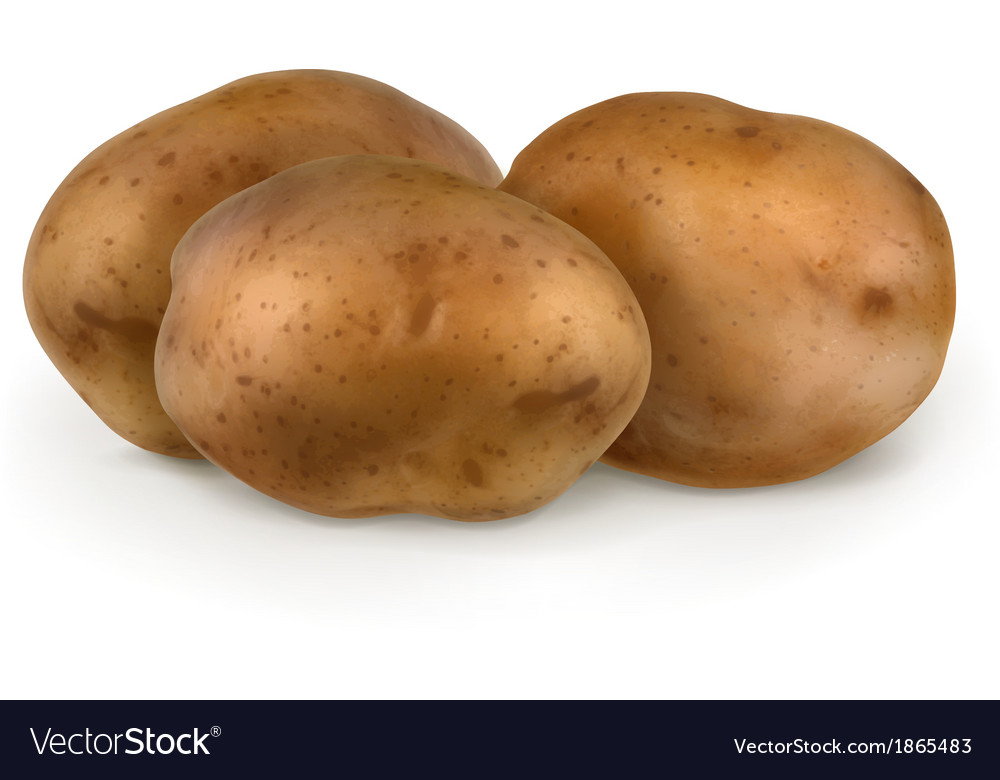 Potatoes vector | Price: 3 Credit (USD $3)