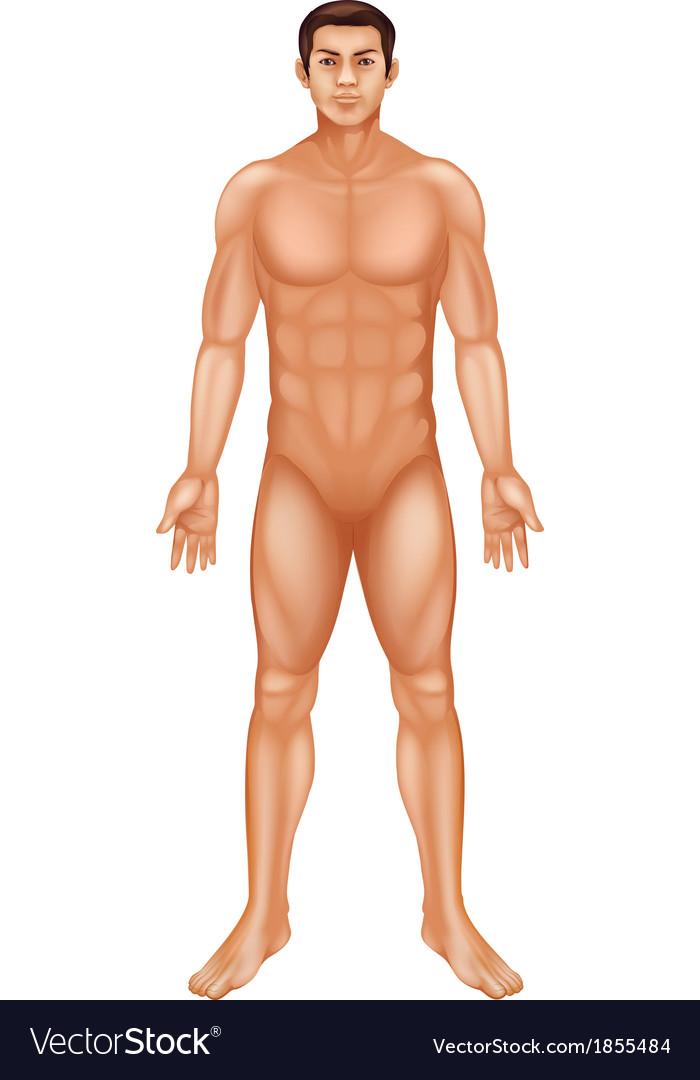 Male body vector | Price: 1 Credit (USD $1)