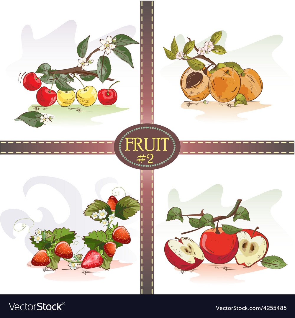 Cherries apricots strawberries and apples vector | Price: 1 Credit (USD $1)