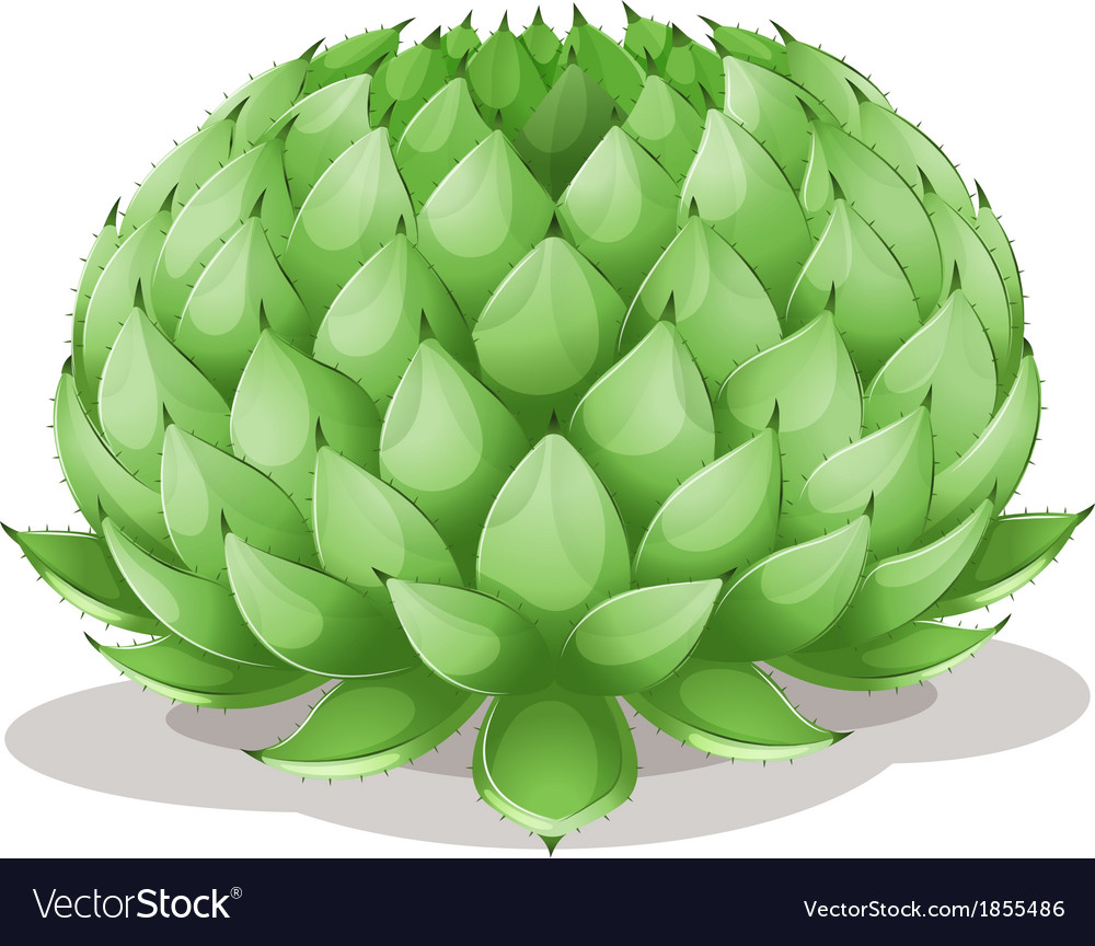 Agave parryi vector   Price: 1 Credit (USD $1)