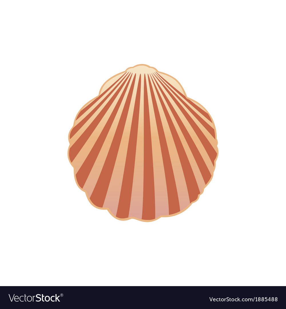 Seashell eps10 vector | Price: 1 Credit (USD $1)