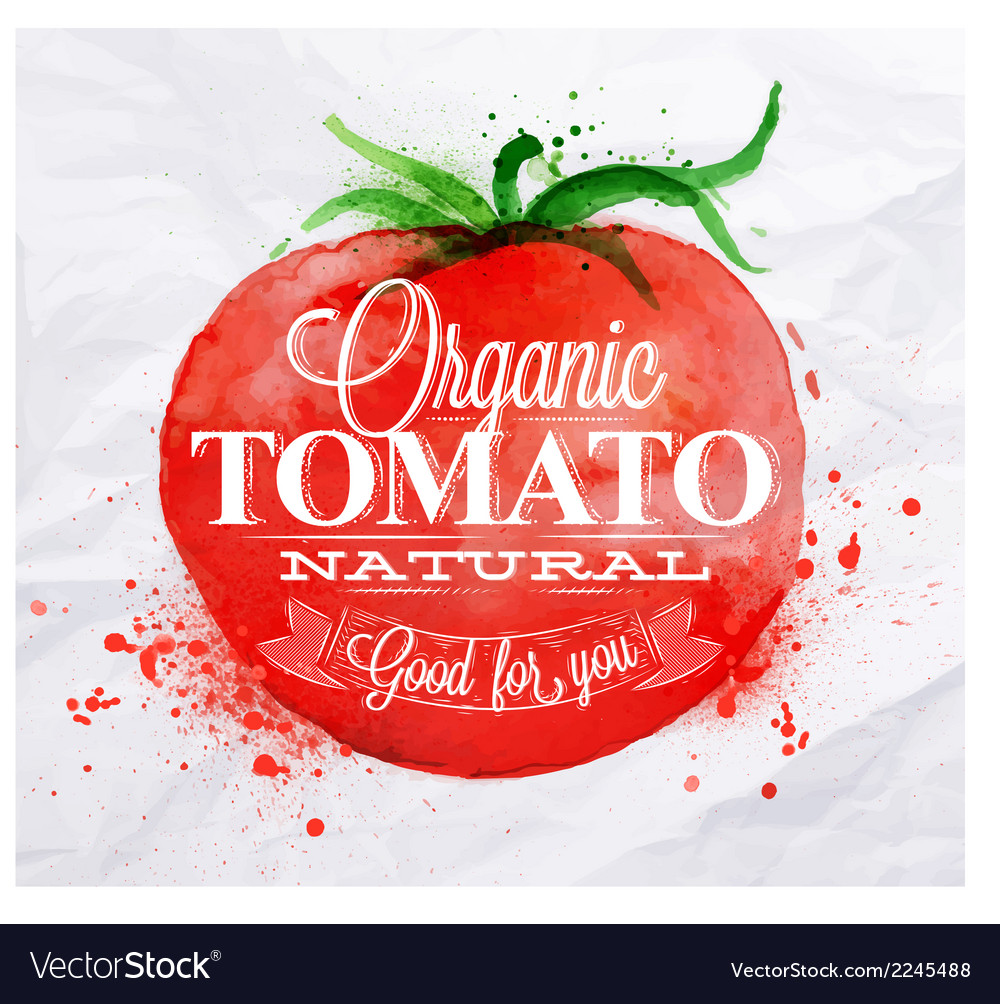 Tomato watercolor poster vector | Price: 1 Credit (USD $1)