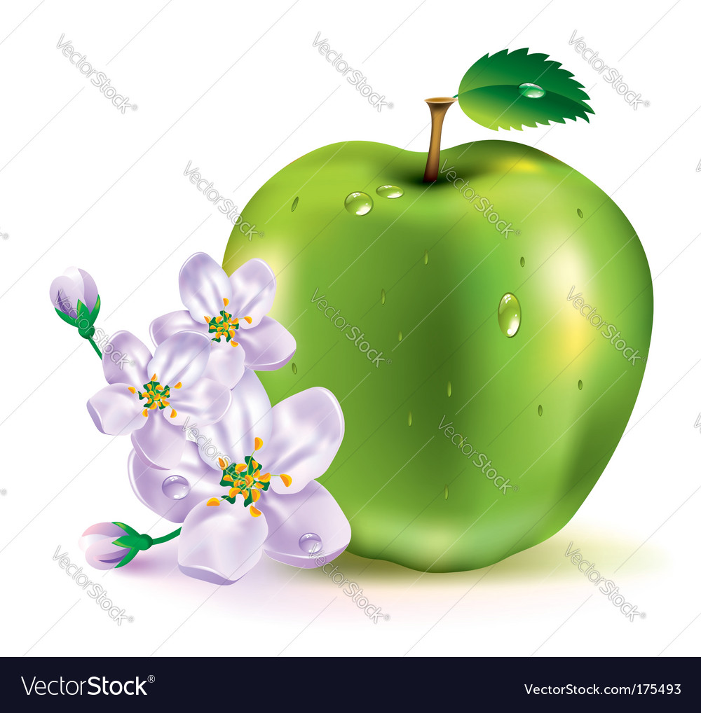 Apple the fruit and flowers vector | Price: 3 Credit (USD $3)