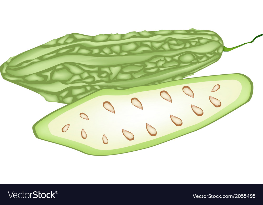 Fresh green bitter squash on white background vector | Price: 1 Credit (USD $1)