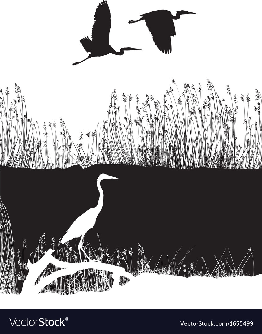 Herons on the river vector | Price: 1 Credit (USD $1)