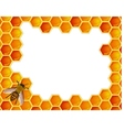 Bee with honeycomb vector