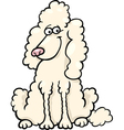 Poodle dog cartoon vector