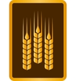 Golden wheat ears vector
