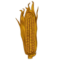 Yellow corn vector
