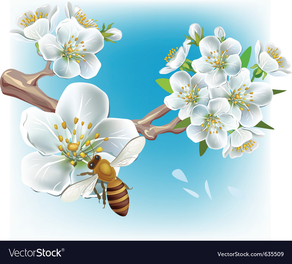 Flowering branch and a bee vector | Price: 3 Credit (USD $3)