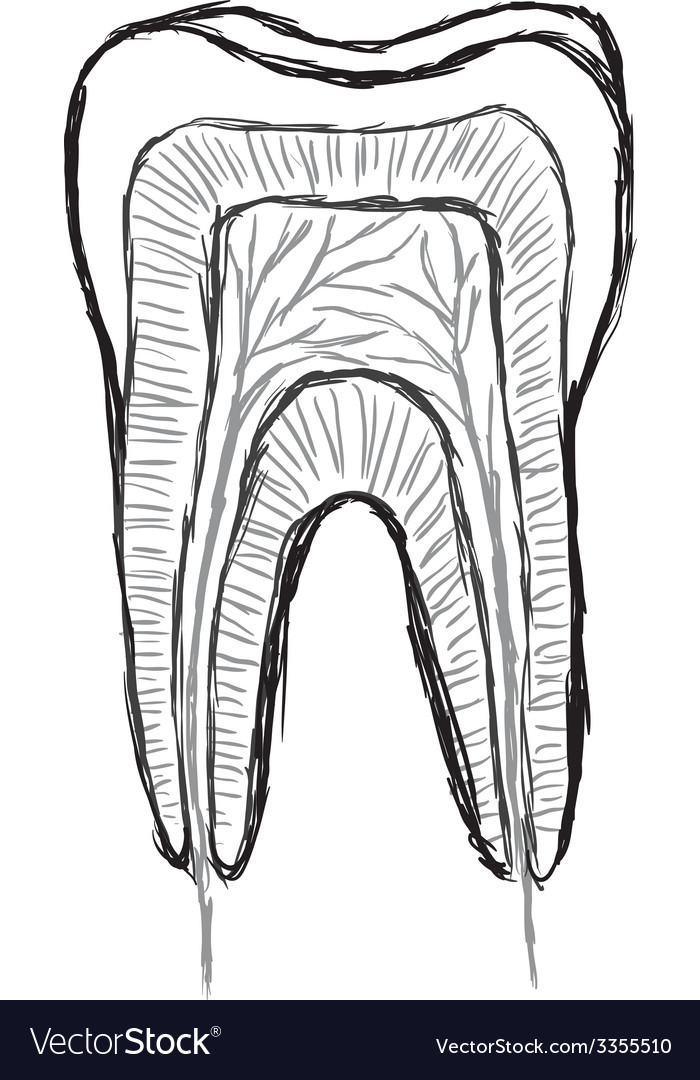 Doodle tooth vector | Price: 1 Credit (USD $1)