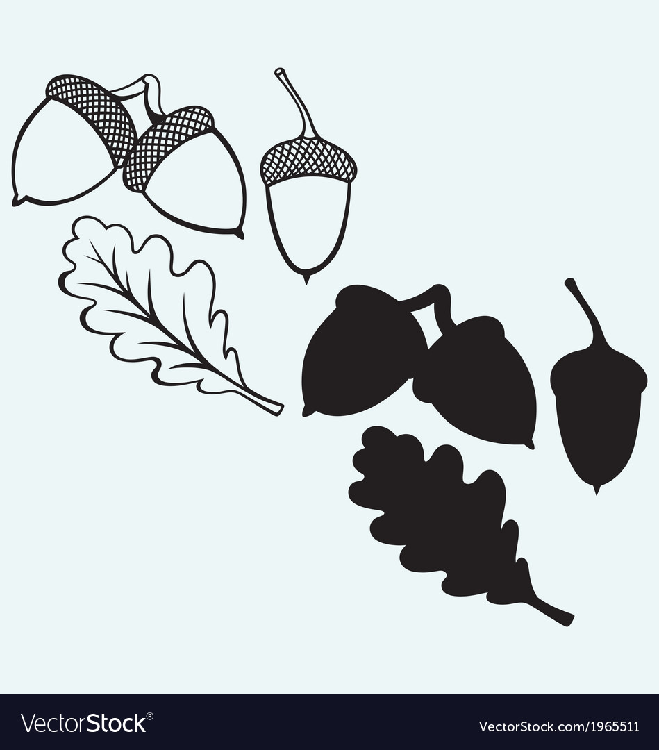 Acorns with leaf vector