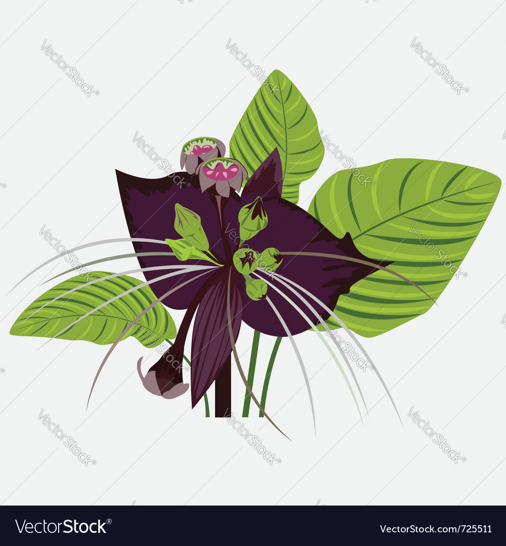 Black flower of devil with leaves vector | Price: 1 Credit (USD $1)