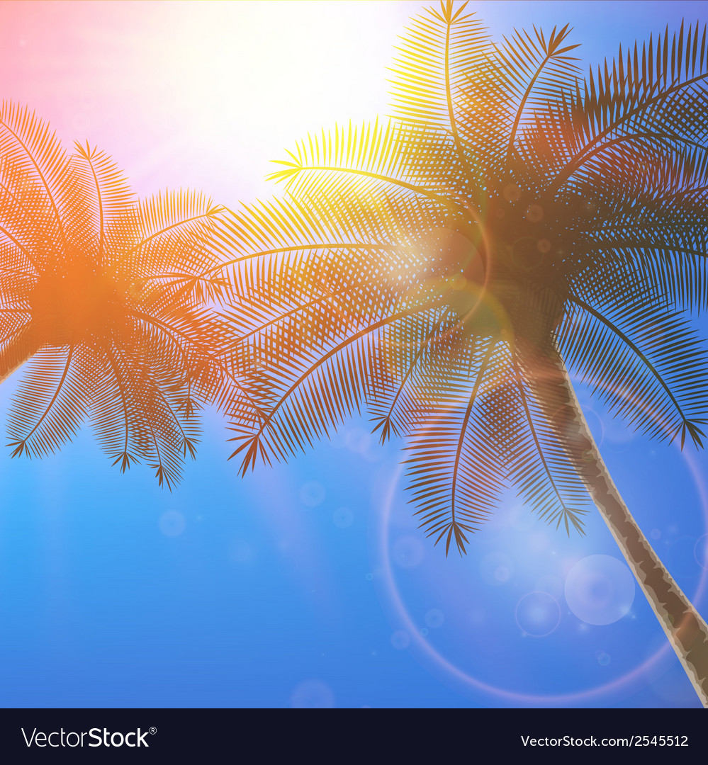 Palm trees and sun in sky vector | Price: 1 Credit (USD $1)