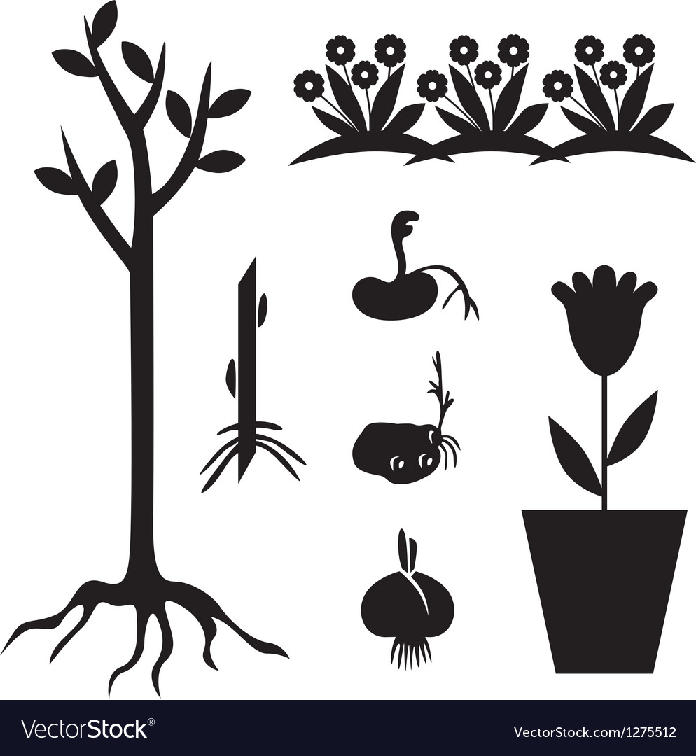 Seedling set vector | Price: 1 Credit (USD $1)