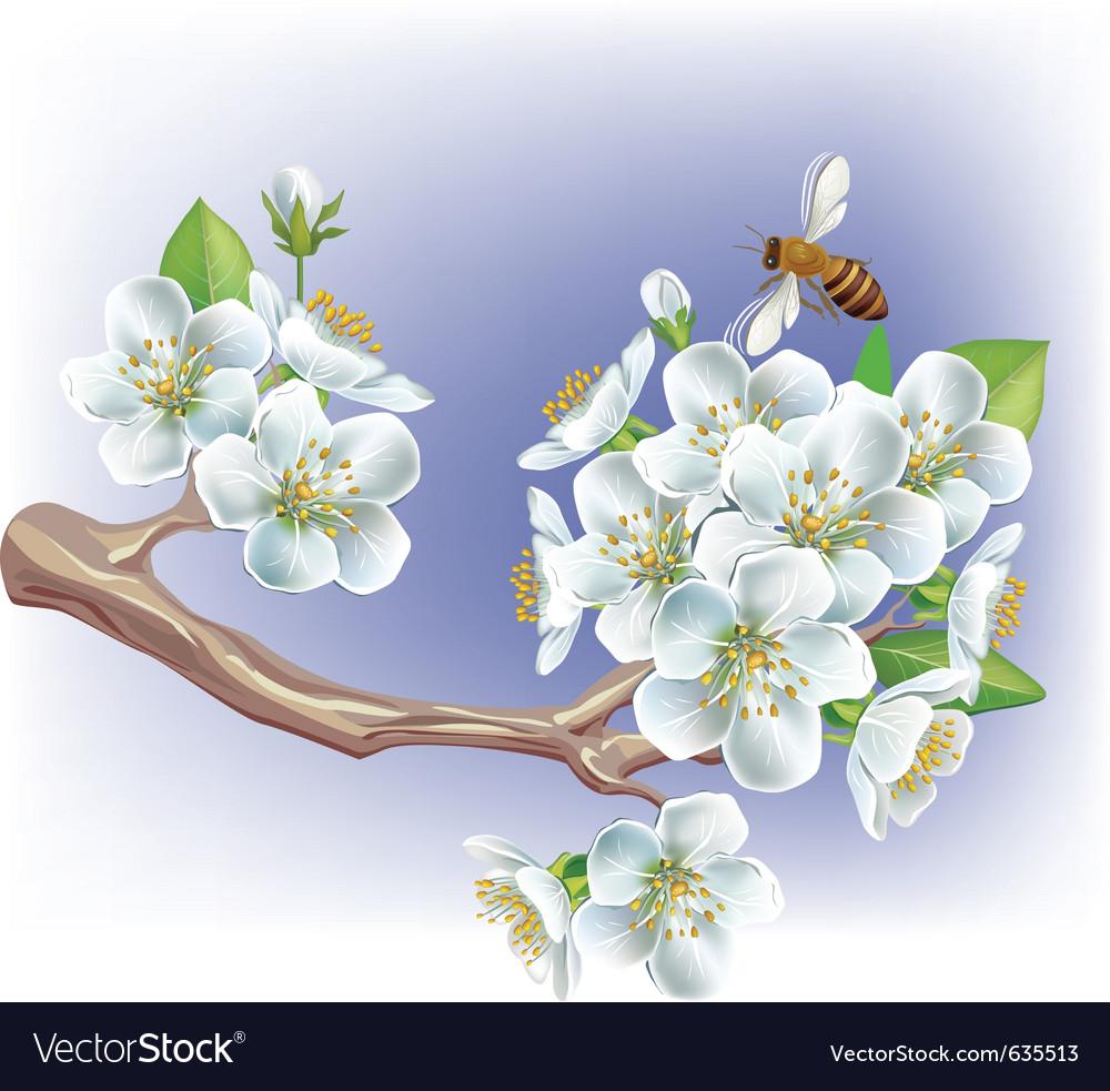 Flowering branch vector | Price: 3 Credit (USD $3)