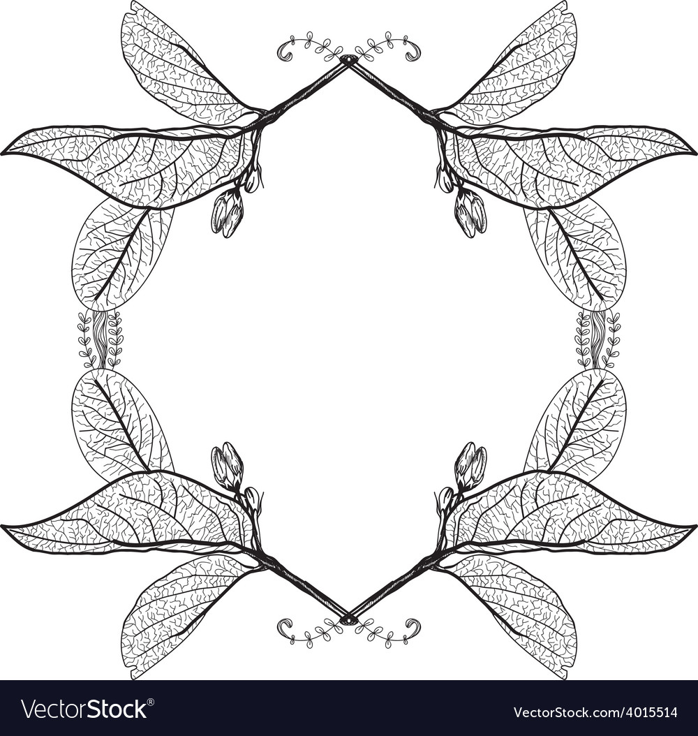 Leaves contours on a white background floral vector | Price: 1 Credit (USD $1)