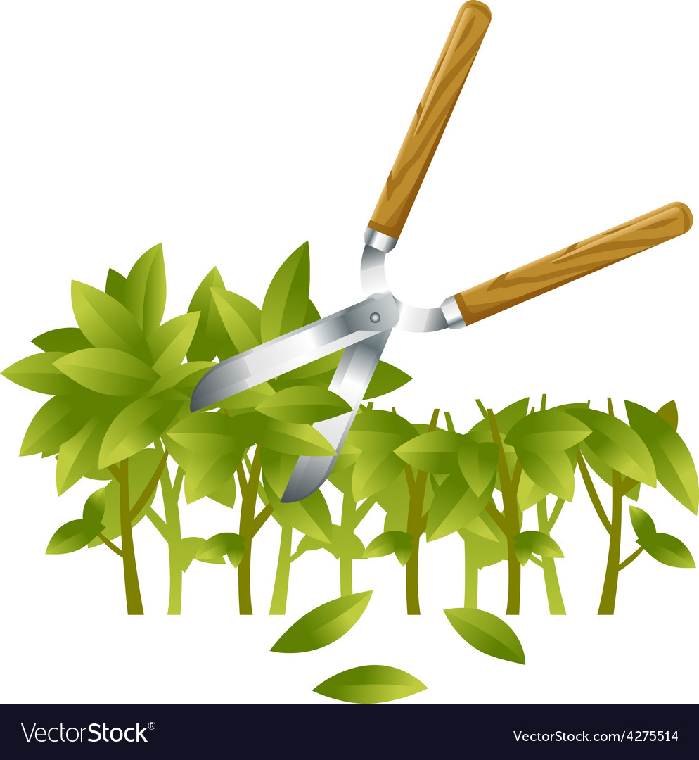 Trimming bushes vector | Price: 1 Credit (USD $1)
