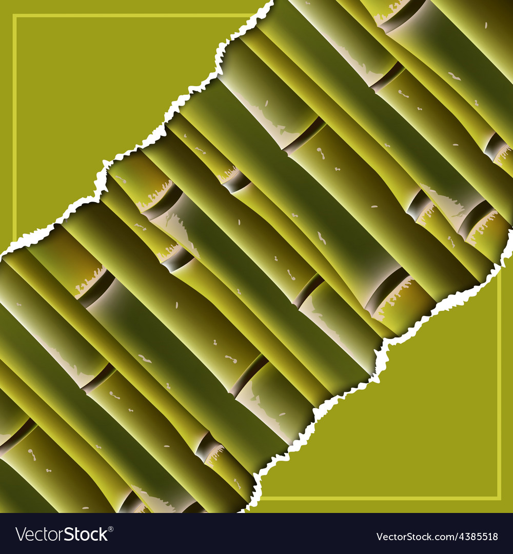 Bamboo branches under the torn paper vector | Price: 1 Credit (USD $1)