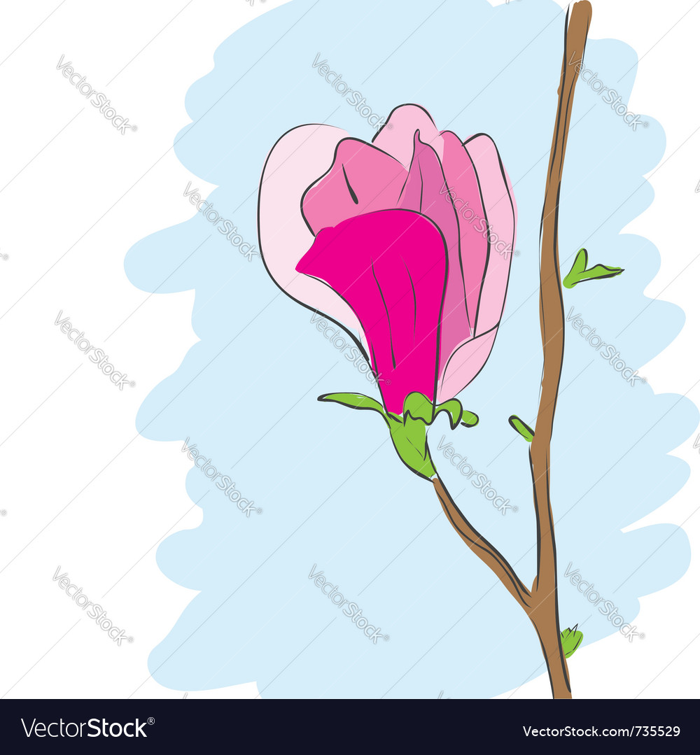 Magnolia pink flower blossom vector | Price: 1 Credit (USD $1)